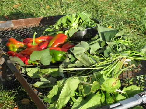 Dinner Harvest cart