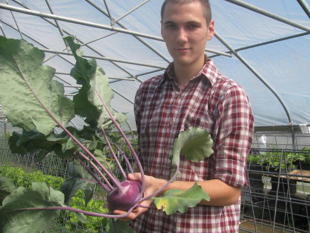 kohlrabi and Taylor