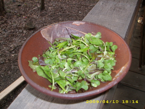 Greenhouse Thinnings Salad