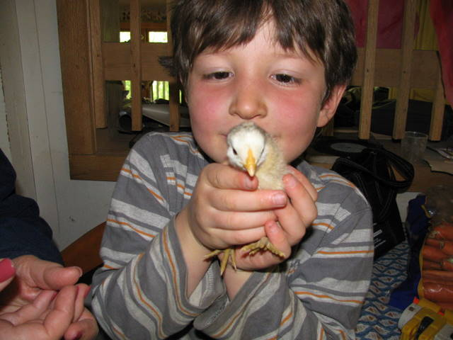 jonah and the chick