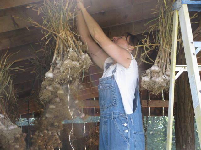 donna garlic