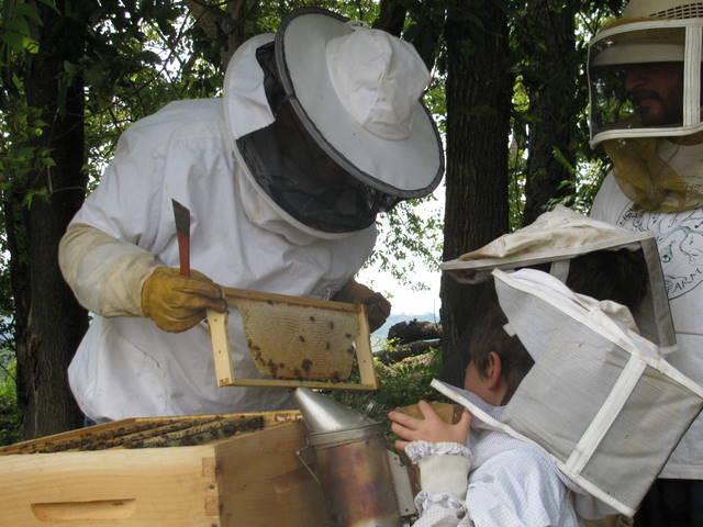 steve kids bees