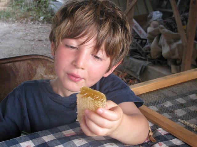 jonah honeycomb