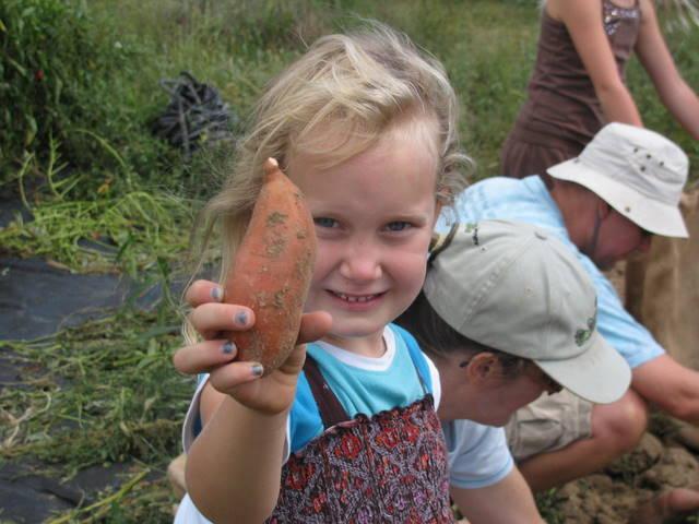 Sweet Potato girl